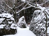 Three cedar hedges at Lilactree Farm