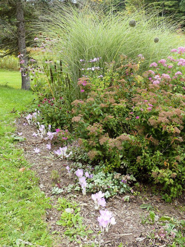 echinacea, liatris, spirea, hydrangea, colchicum byzantinum, lamium fall vignette