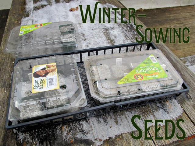 How I Beat The Winter Blues By Winter Sowing