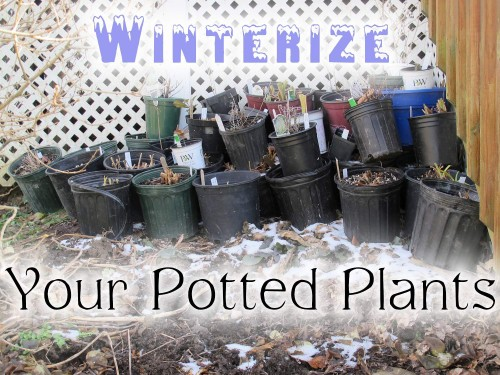 Winterize Your Potted Plants