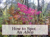alien-shrubs-featured-image