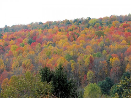colorful tree foliage in autumn