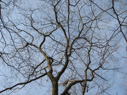 tracery of bare tree branches