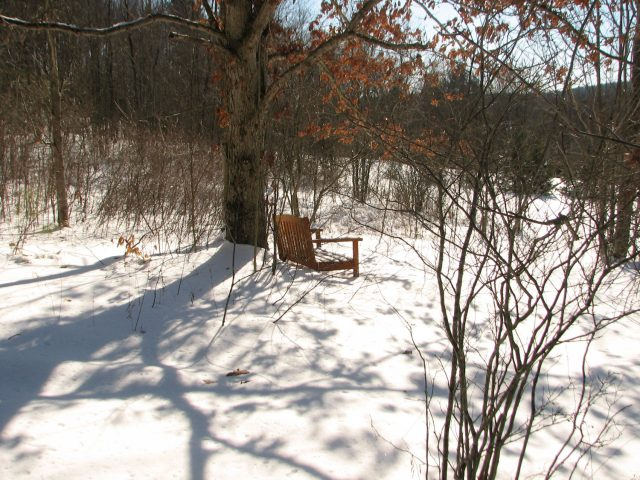 bench in the snowy woods
