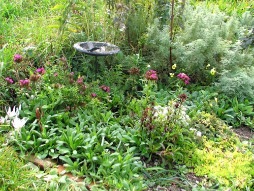 Bird bath with cold hardy flowers