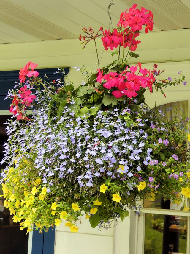 birthday hanging basket