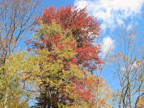 red foliage backlit by blue sky in autumn