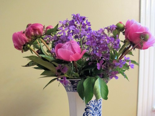bouquet of peonies and Dames rocket