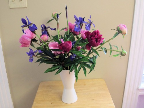 Siberian iris and peonies make a pleasing backyard bouquet