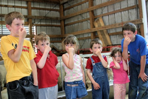 These children toured the Old Chatham Sheepherding Company, one of the farms profiled in the book.