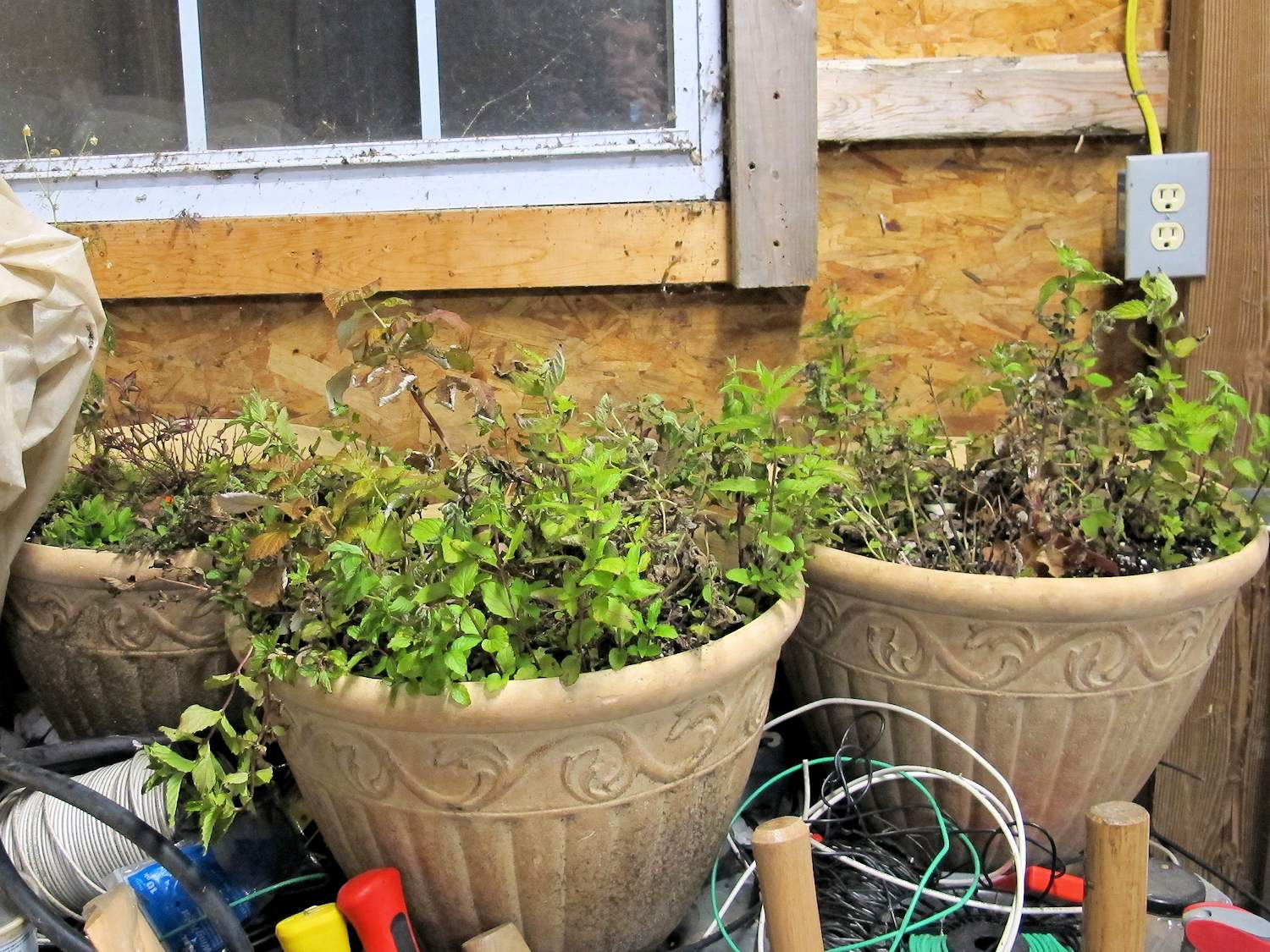 how to pull your potted plants through the winter