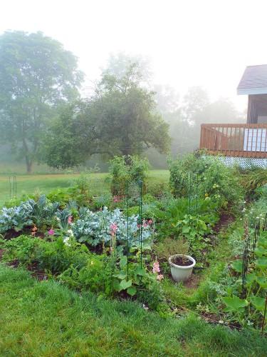 Talitha's Cottage Garden