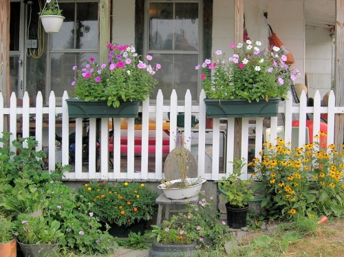 Real cottage gardening doesn't spend much money to make a cheerful summer garden.