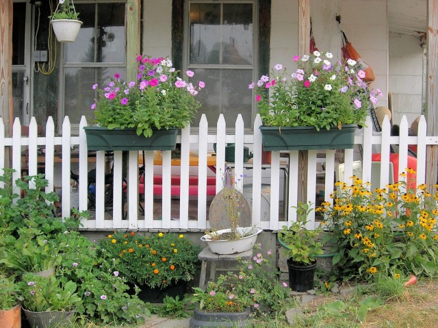 It doesn't take much money to make a cheerful summer garden.