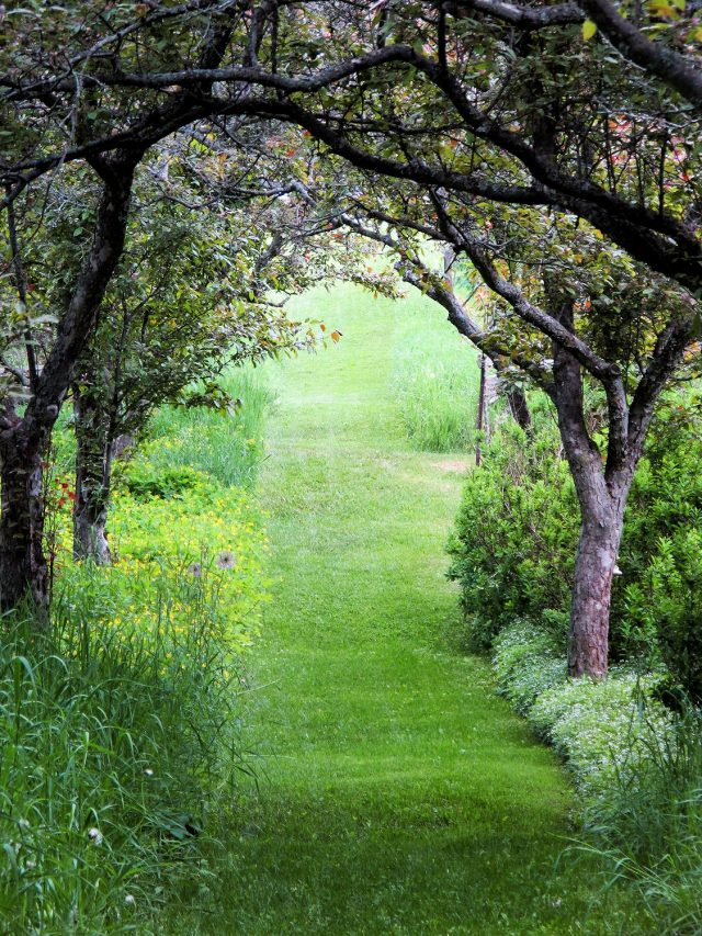 tree lined path to the field