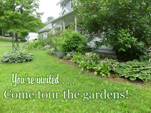 A Tour Of The Gardens: Garden Bloggers Bloom Day June 2016