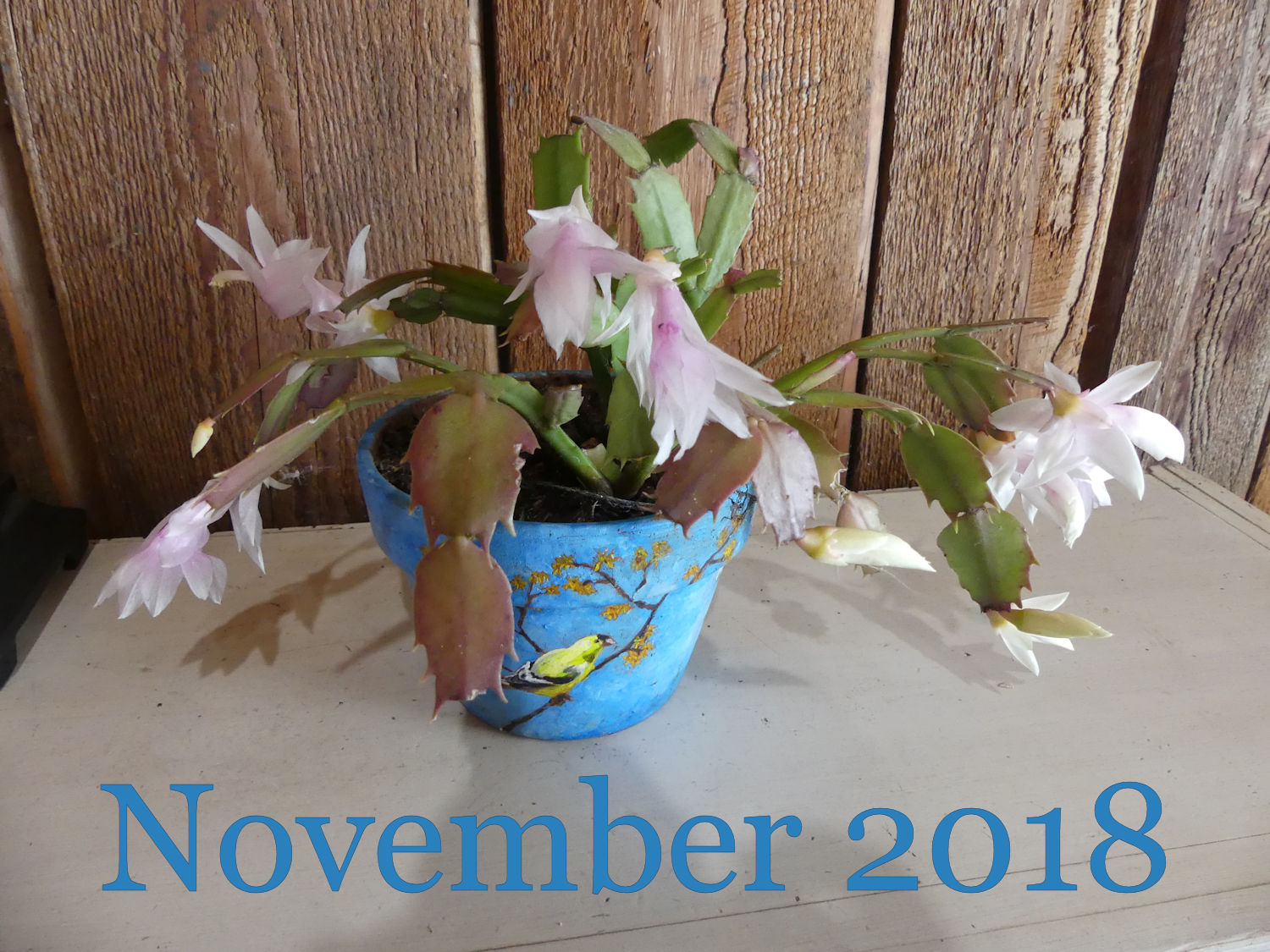 Lessons Learned Growing Houseplants