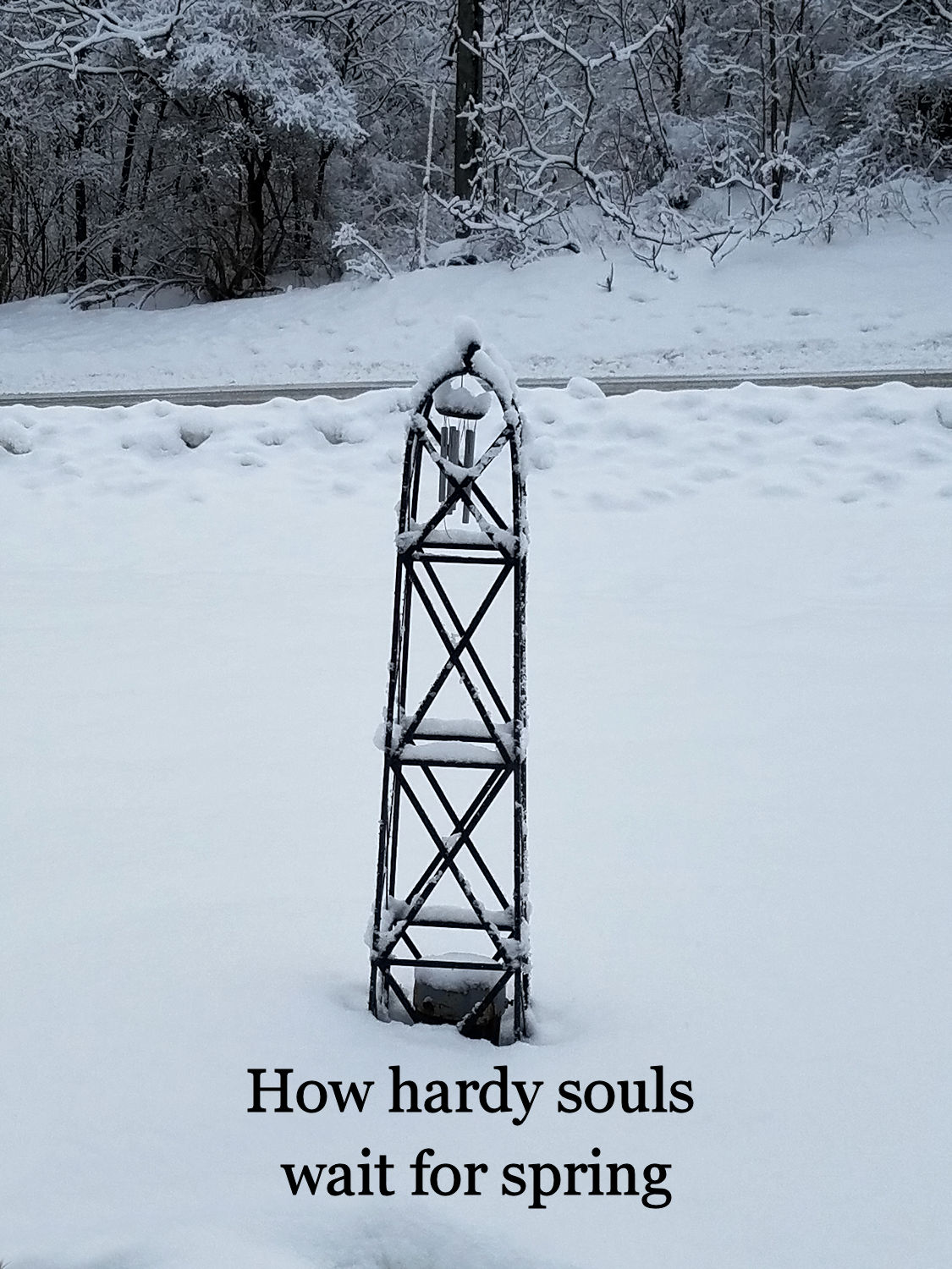 How Hardy Souls Wait for Spring