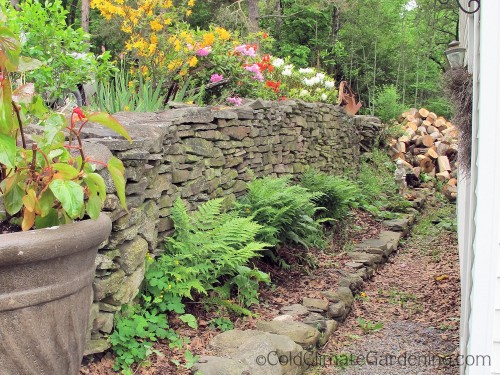 fieldstone wall with ferns growing at the base
