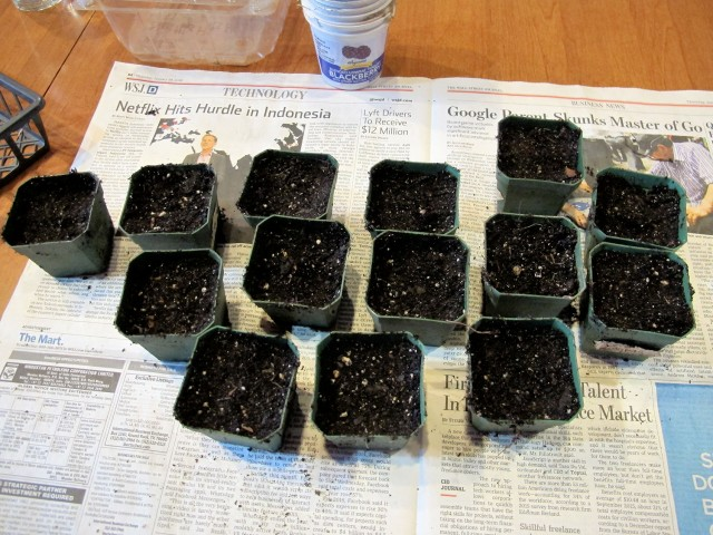 small pots filled with potting soil