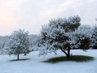 first_snow_intro
