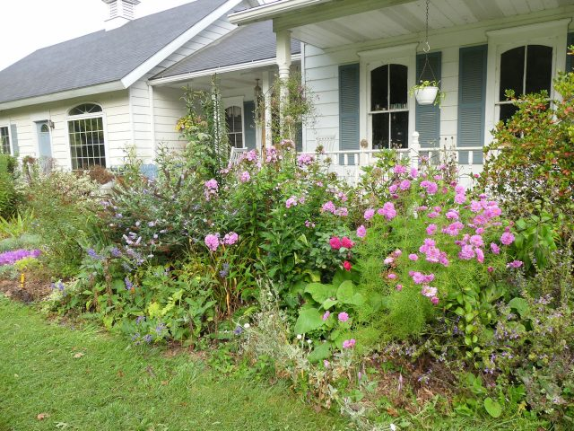 Kathy Purdy's Front Walk North bed in September