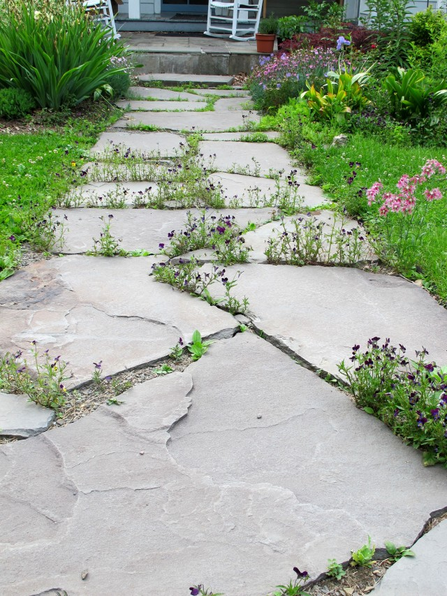 Stone walk planted with violas at coldclimategardening.com