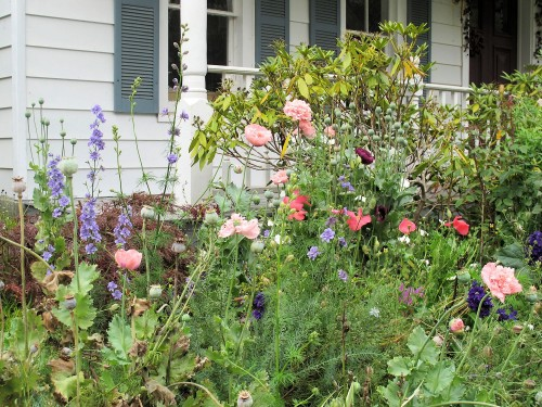 Various annual poppies, larkspur, and love-in-a-mist (Nigella) give this border a cottage garden look.