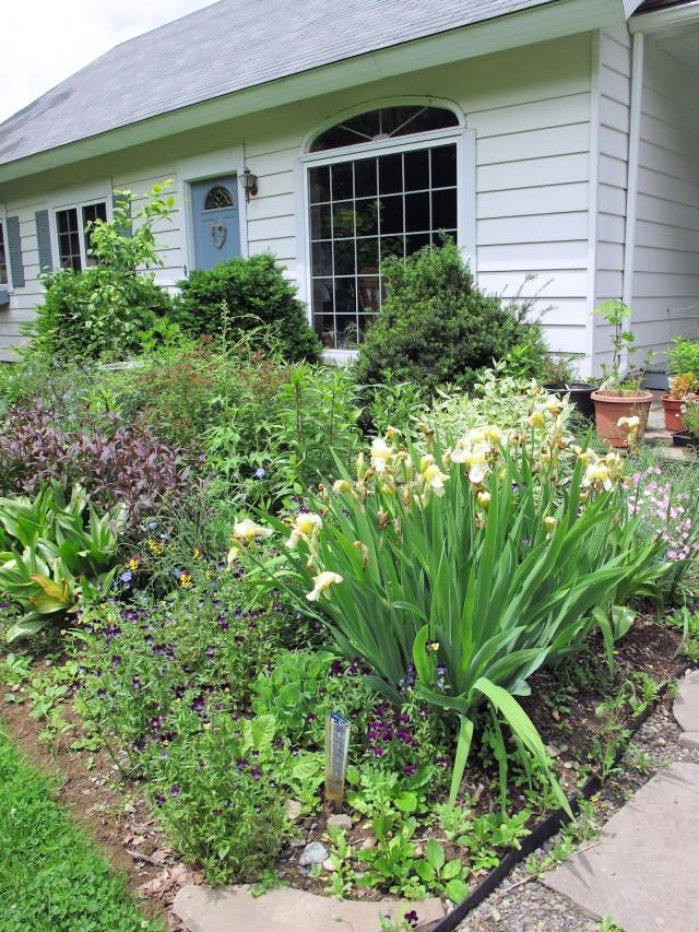 Mature garden bed