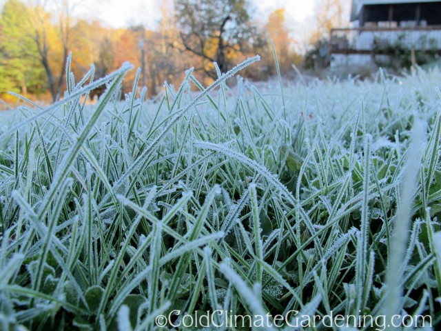 frost on lawn grass