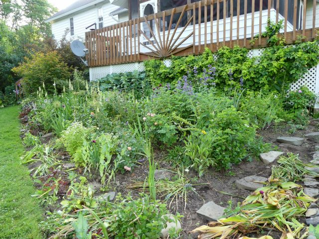 fully weeded deck west
