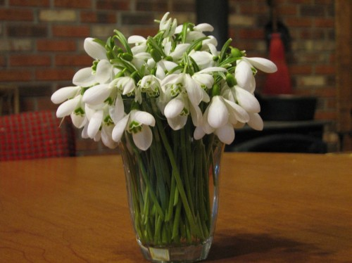 Juice glass full of snowdrops
