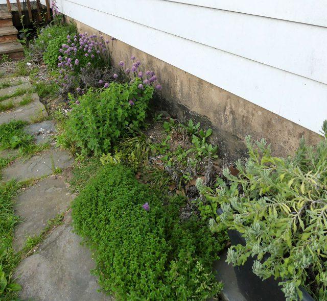 cold climate herb garden