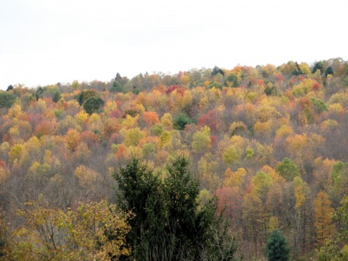 The hillside was past peak color two days ago, but still looked pretty.