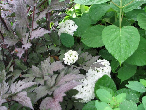 Incrediball hydrangea with Black Negligee actaea