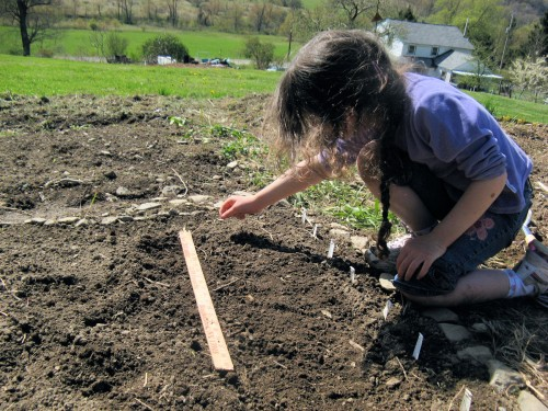 Even young children take gardening seriously and want to succeed. (Photo by Cadence Purdy)