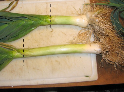 Most recipes advise using only the white part of the leek, but I usually trim them where the leaves start branching, as indicated by the dotted line.