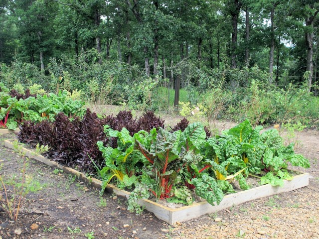 Lettuce and Swiss chard at the garden of P. Allen Smith