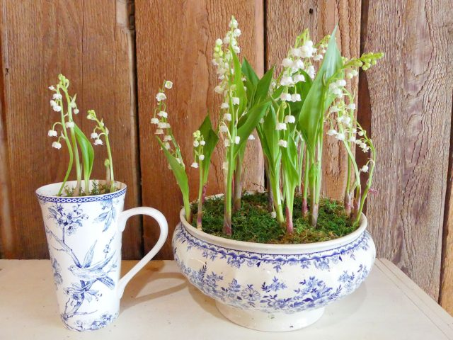 lily of the valley in mug and tureen