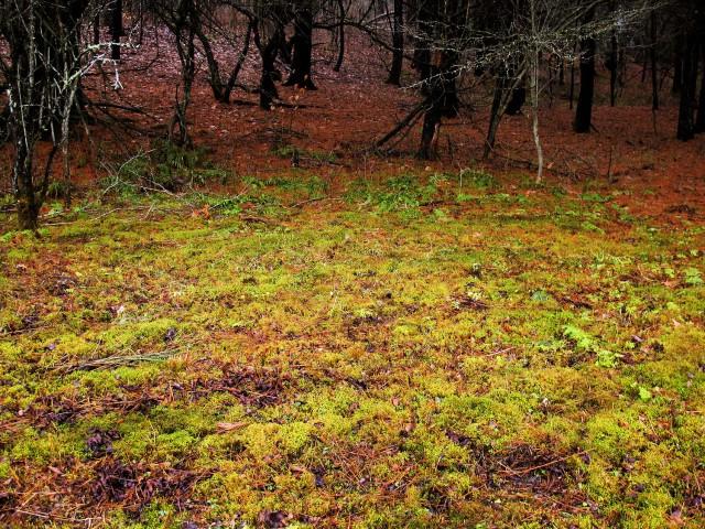 mossy field