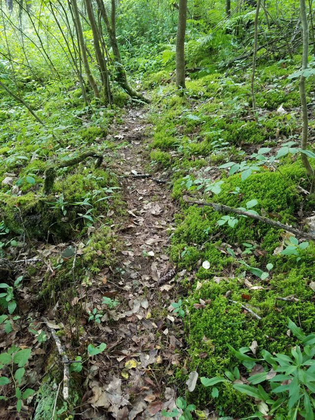 mossy path leading to the treasure of the birthday treasure hunt