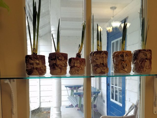 paperwhites in face mugs