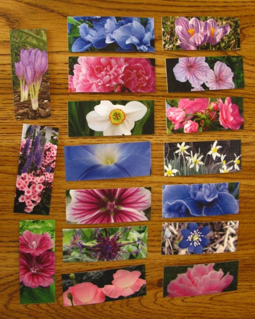 My MOO flower Minicards