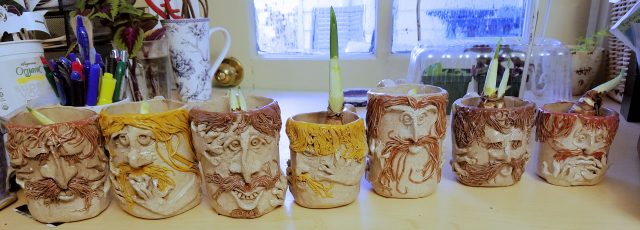 narcissus in mugs