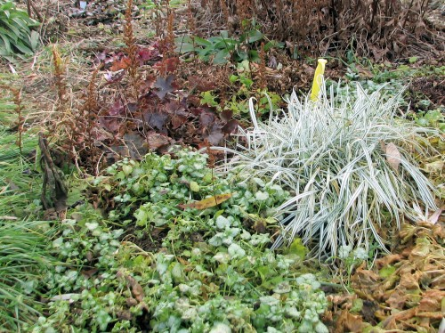 Variegated bulbous oat grass wins the award for unspoiled autumn foliage. It looks as fresh as it did in spring. (It does look bad in high summer.)
