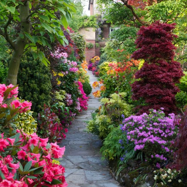 amazing shrubs featured in Kerry Mendez's webinar