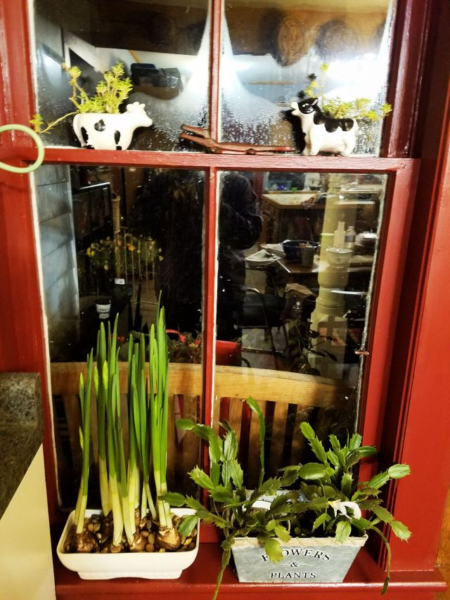 plants in window