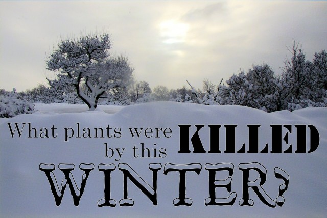 What plants were killed by winter?