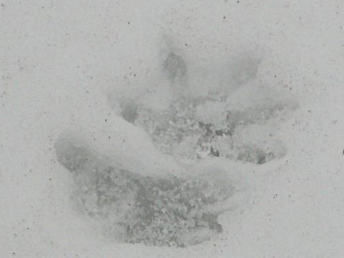 Possum track detail