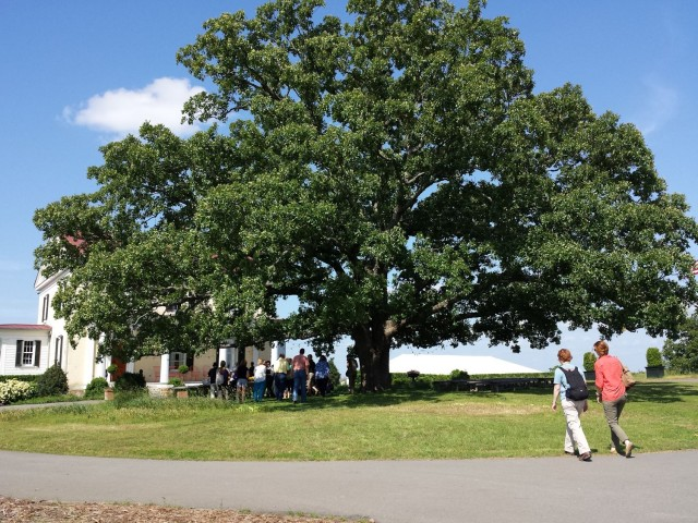 post oak at P. Allen Smith's Moss Mountain Farm